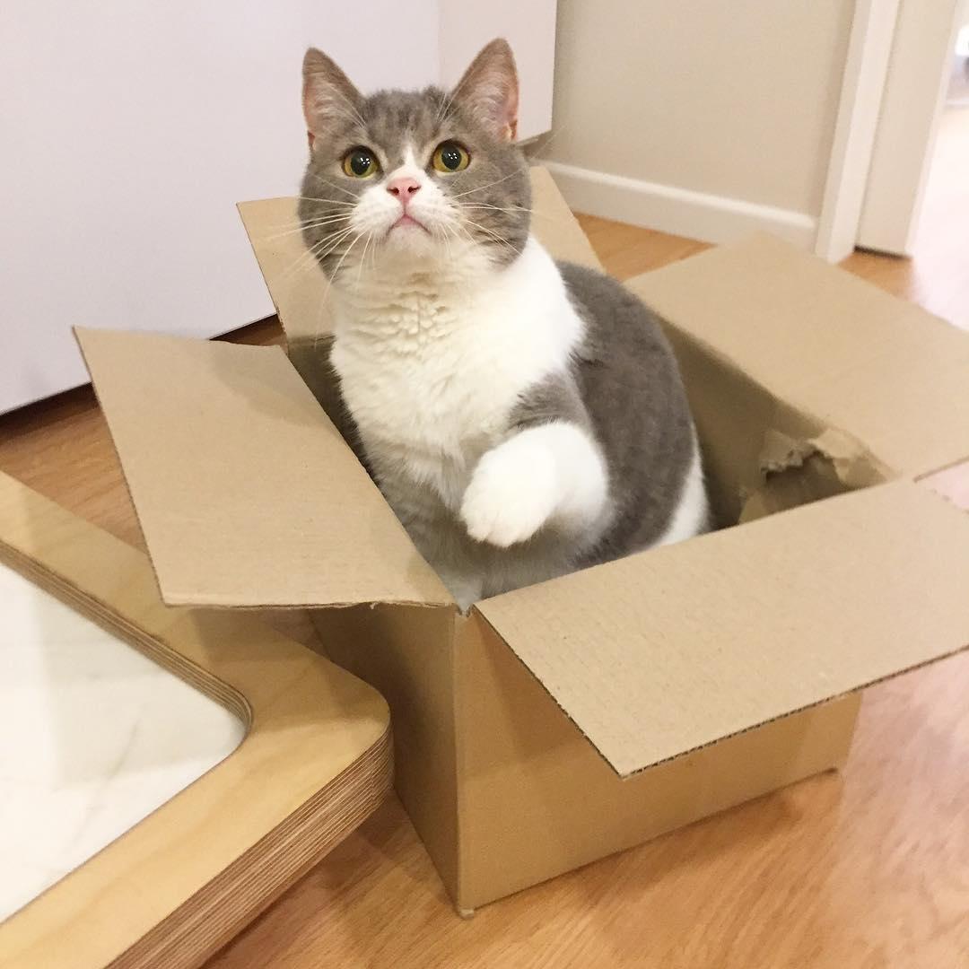 Những điều cần tránh khi vận chuyển mèo đi Mỹ